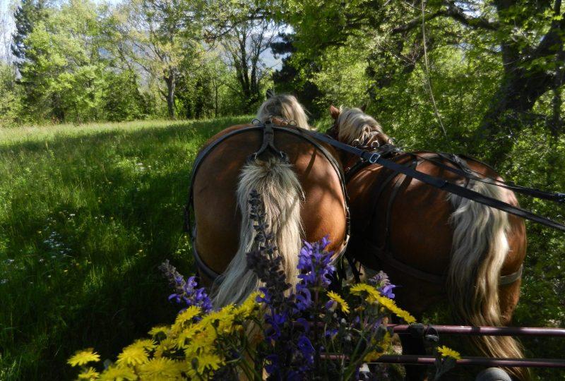 Promenade en calèche pour tous autour du massif du Couspeau à Le Poët-Célard - 2
