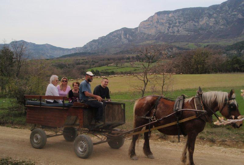 Promenades et randonnées en attelage à cheval – Le Relais du Temple à Mornans - 1