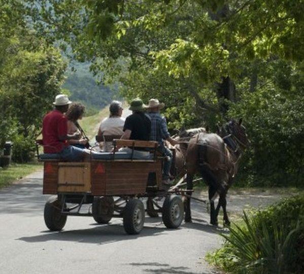 Promenades et randonnées en attelage à cheval – Le Relais du Temple à Mornans - 0
